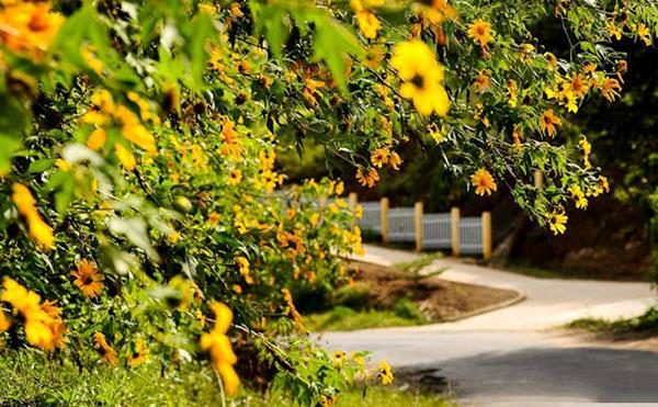 các con đường hoa dã quỳ